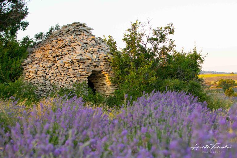 White Lavender-3
